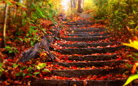 125588-Autumn-Leaves-On-Steps